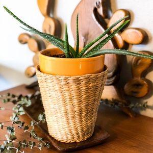 Wicker Plant Basket